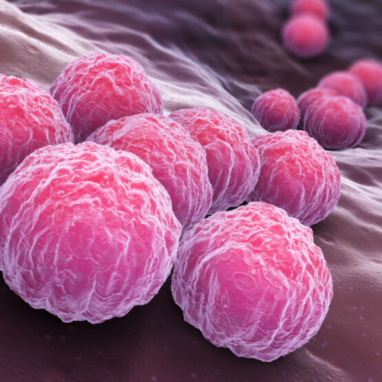 Animation: Chlamydien Bakterien